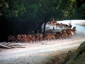 פארק חיות הבר בוראזני, קוניזה, יוון