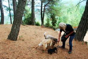פטריות כמהין, יוון