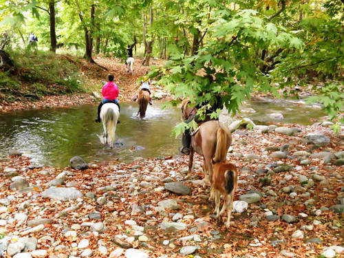 צפון יוון, אזור האולימפוס, אלאטוחורי, סוסים