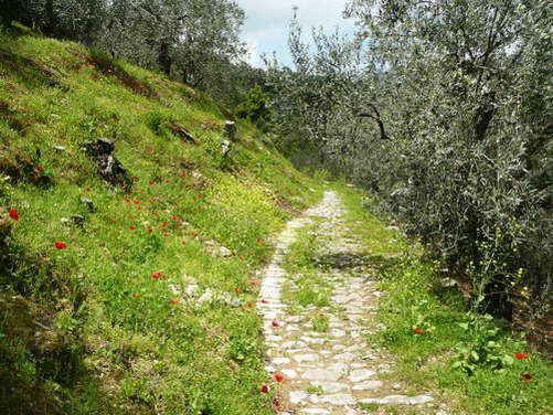 קלדרימי - דרכים עתיקות מרוצפות אבן, חצי האי פיליון