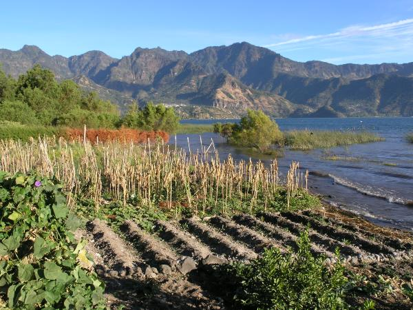גידולים חקלאיים על שפת אגם אטיטלן, גואטמלה