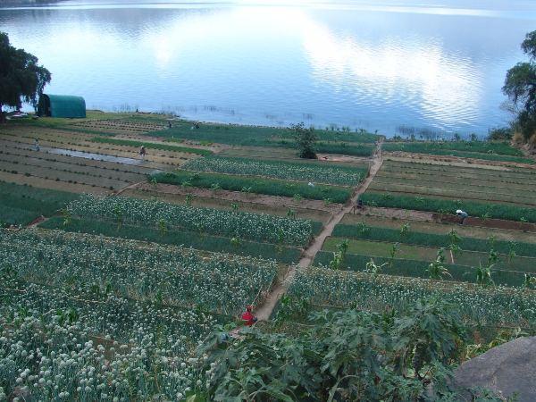 חקלאות סביב אגם אטיטלן, גואטמלה