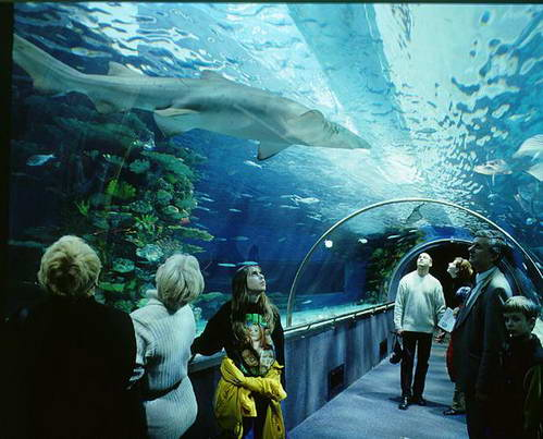 כרישים ודגים בטרופיקריום, לטייל עם ילדים בבודפשט