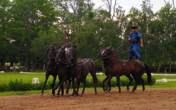 חוות הסוסים של לאזאר, חצי שעה מבודפשט