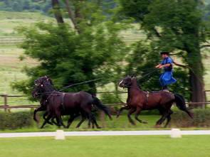חוות הסוסים של לאזאר, טיולי יום מבודפשט