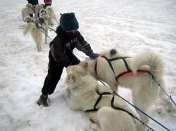 מזחלות כלבים באיסלנד