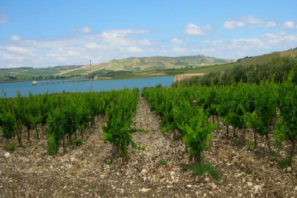 טיול יין בסיציליה