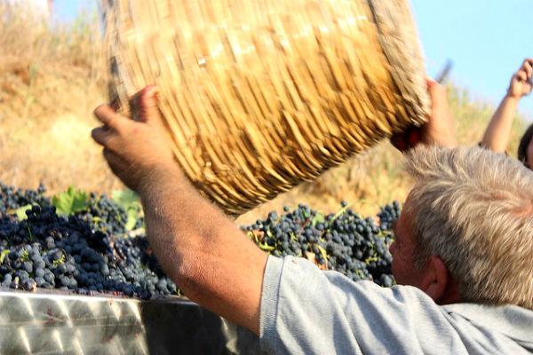 יין מרסלה בסיציליה