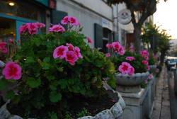 דרום איטליה,  מוליזה, אניונה