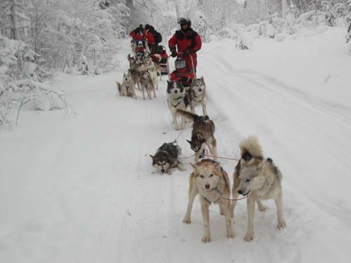 טיול חורף ללפלנד, מזחלות שלג