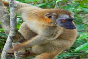 למורים במדגסקר