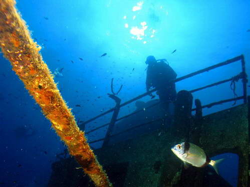 ספארי צלילה במלטה