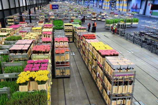 בורסת הפרחים אלסמייר, הולנד
