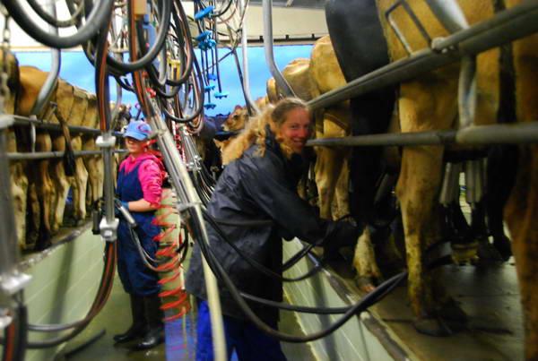 ניו זילנד, אירוח ועבודה בחווה