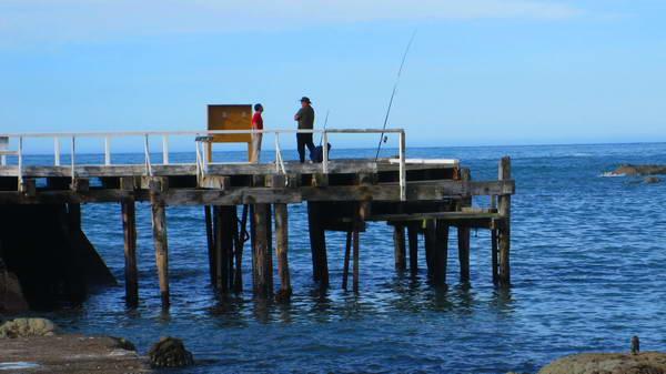 דייג בניו זילנד