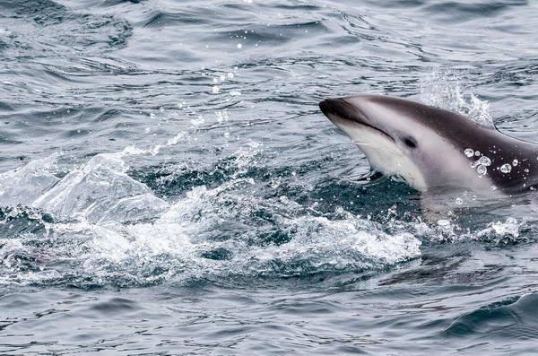 דולפינים במפרץ קאיקורה, ניו זילנד