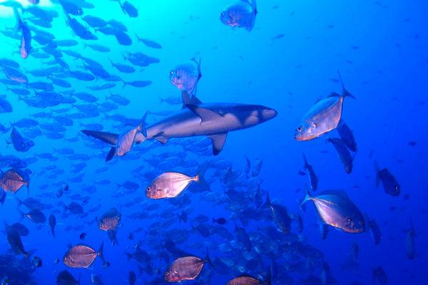 צלילה בפלאו - החור הכחול