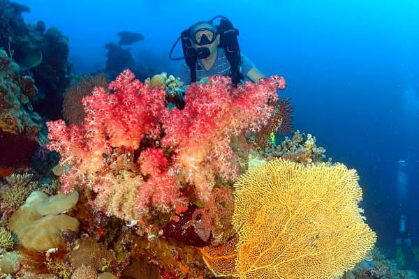 מתחת למים בפלאו