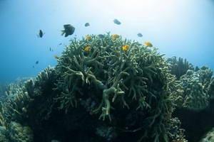 צלילה בפיליפינים