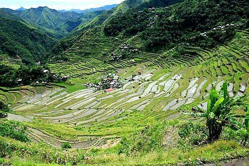 טרסות האורז של הפיליפינים
