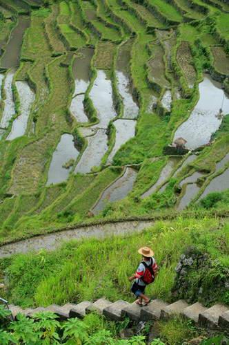 טרסות האורז של הפיליפינים, בנאווה