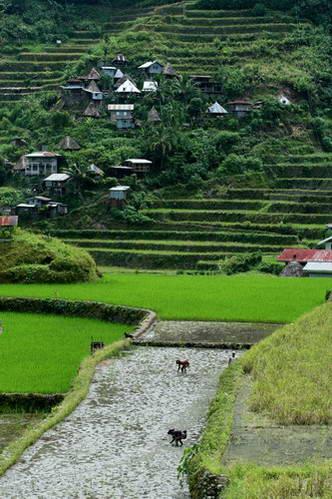 טרסות האורז של הפיליפינים, האי לוזון