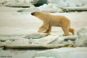 הפלגה לאנטארקטיקה