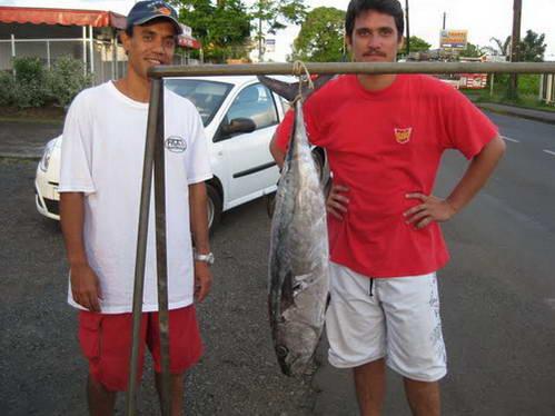 מחפשים קונה לדג הטונה