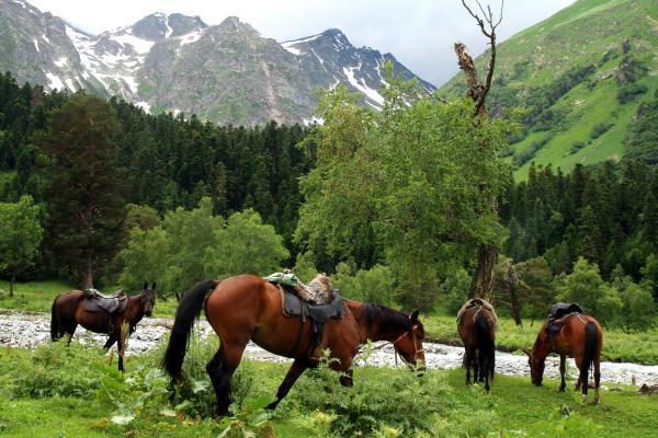 סוסים רועים בקווקז הרוסי