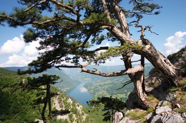 הרי טארה, סרביה