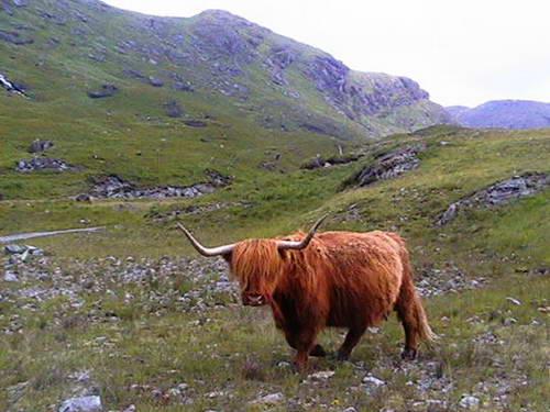 היילנדס, סקוטלנד