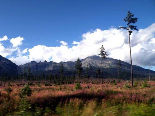 היער מתחיל להשתקם, חמש שנים אחרי הסופה של שנת 2004
