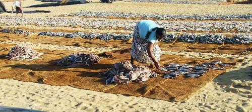 סרי לנקה, שוק הדגים