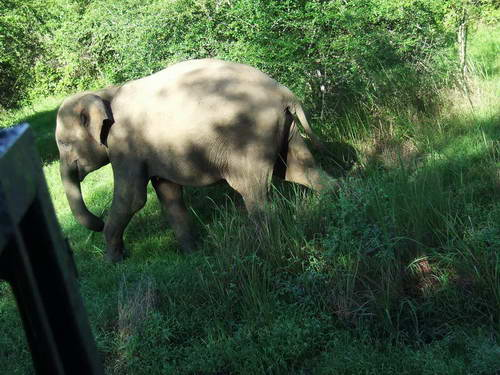 סרי לנקה, פילים בפארק הלאומי ואסגאמווה