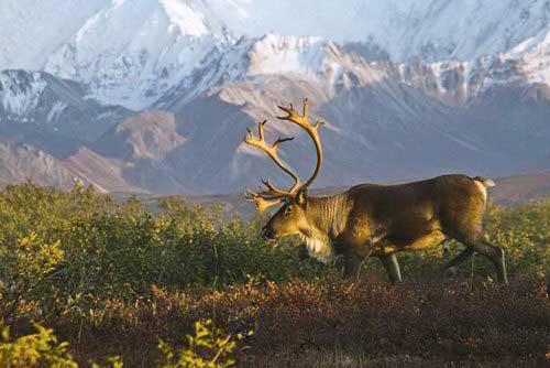 אלסקה, שמורת דנאלי