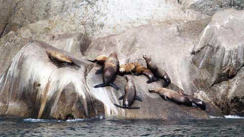 אלסקה, שמורת קינאי פיורדס, כלבי ים