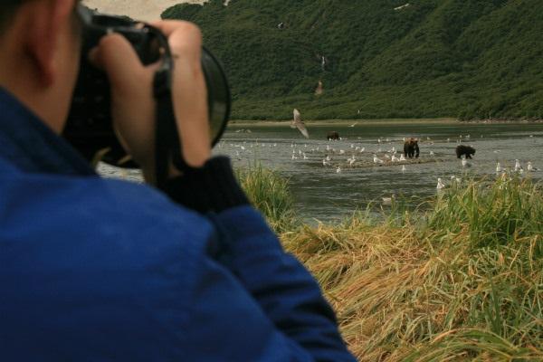 צילום דובי גריזלי
