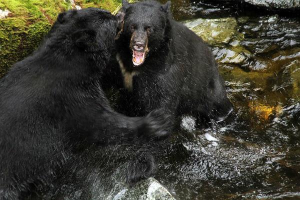 תוצאת תמונה עבור דוב רוחץ