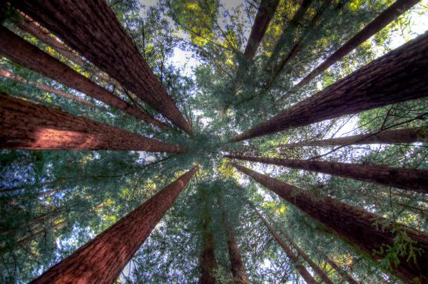טיול בשמורת רדווד, קליפורניה