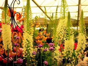 תערוכת הפרחים ברובע צ'לסי, לונדון