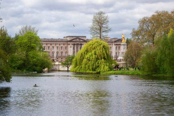 האגם בפארק סנט ג'יימס וארמון בקינגהאם ברקע, לונדון