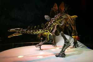 מוזיאון ההיסטוריה של הטבע, לונדון