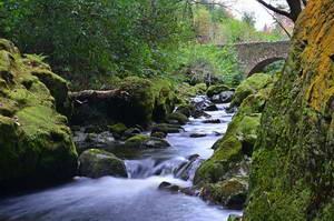 יער טולימור, משחקי הכס, צפון אירלנד