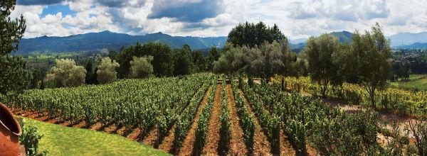 יין בקולומביה