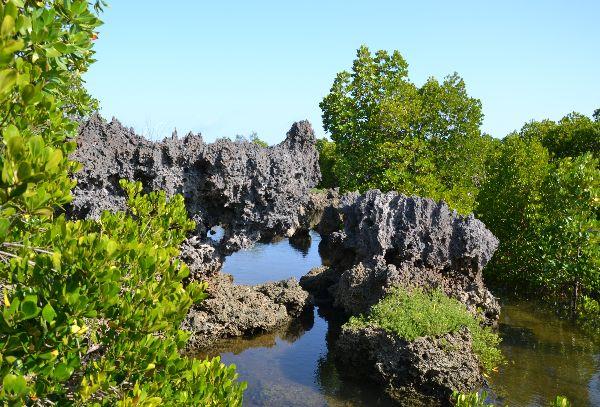 עצי מנגרוב בשמורה הימית שבדרום קניה