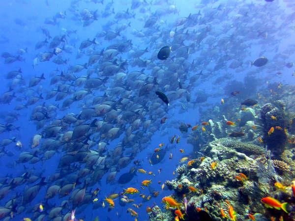 צלילה במוזמביק