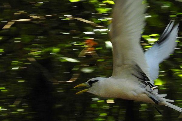 ציפורים בסיישל