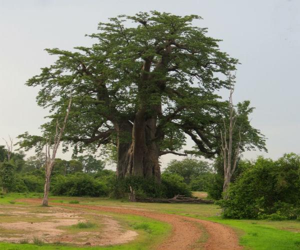 טיול בזמביה, שמורת דרום לואנגה