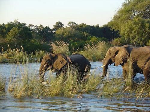 נהר זמבזי, זמביה