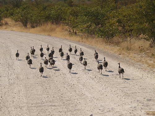 נמיביה, הפארק הלאומי אטושה
